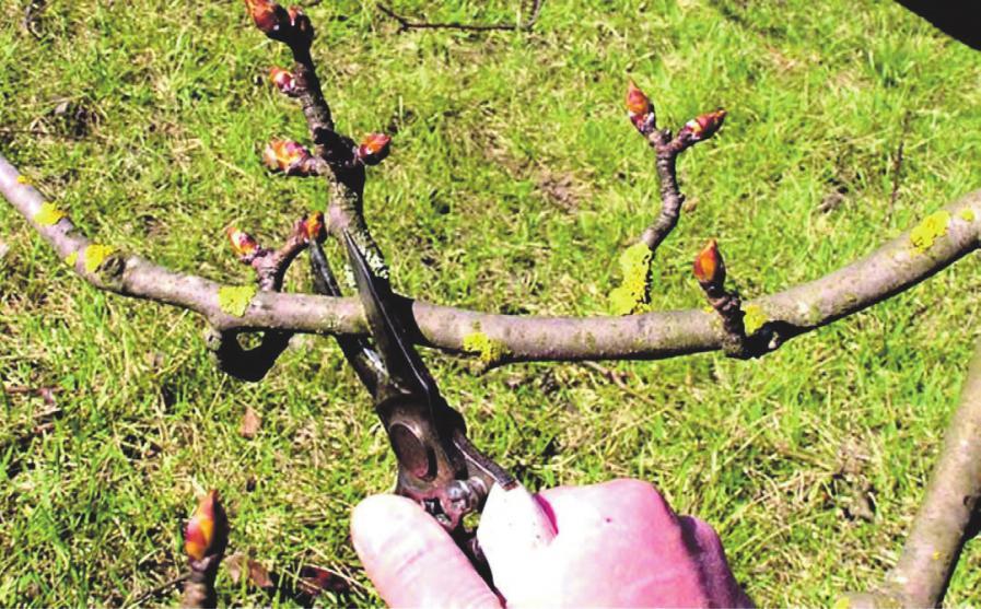 Der richtige Schnitt von Bäumen und Sträuchern will wohl überlegt sein.